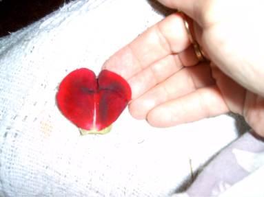 L petal heart
